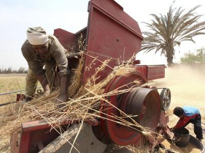 مصر تشتري نصف مليون طن قمحا