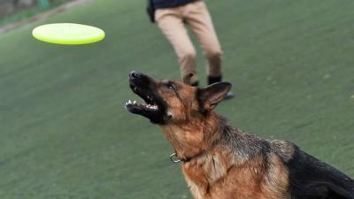 أوفى الأصدقاء.. كلب أصيب بأربع طلقات لينقذ صاحبه من اللصوص