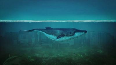 """ما هي لعبة """"الحوت الأزرق"""" التي أثارت الذعر في مصر؟"""