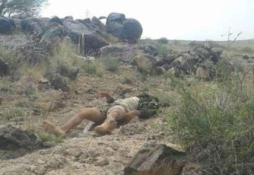 قبائل آل حميقان بالبيضاء تطالب المنظمات الإنسانية بإنتشال جثث الحوثيين