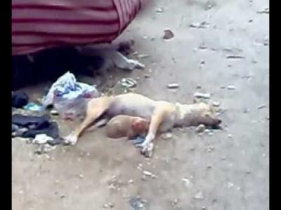 طريقة جديدة للتفجيرات .. انفجارعبوة ناسفة في منطقة حزيز بصنعاء وضعت داخل كلب ميت