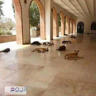 شاهد بالصورة كيف أصبحت كلية الطب بجامعة صنعاء - غياب الطلاب وحضور الكلاب