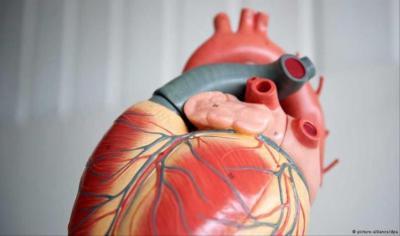 هذه الأعراض تنذر بوجود مرض القلب لديك