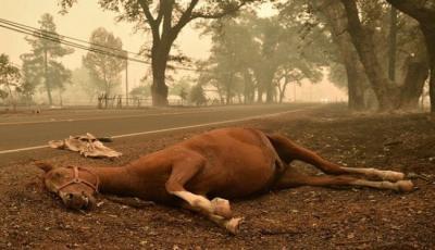 لماذا تموت الأحصنة عند كسر ساقها ؟